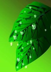 Gocce e foglie