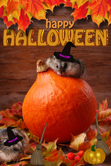 two hamsters in witch hats for halloween