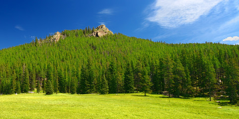 Bighorn National Forest Landscape Wyoming
