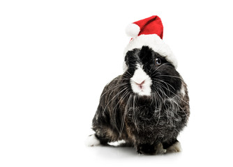 Cute Bunny with Santa Hat