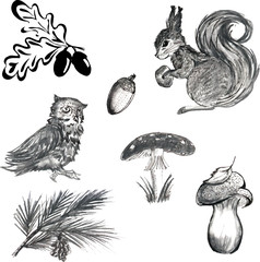 forest_animals_set.