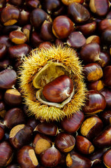 chestnuts on natural background