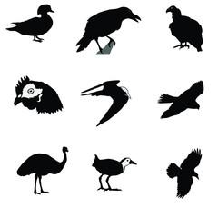 black silhouette of crow,raven,gyrfalcon,condor,tern,hen,emu,man