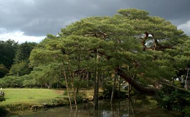 Kenroku Garden, Kanazawa, Japan