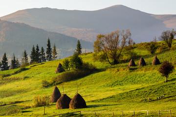 autumn fields near home