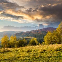 yellow trees on hillside on mountain background at sunrise