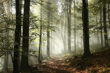 Wall Murals Bestsellers Forest path surrounded by fog in the sunshine