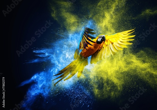 Fototapete Flying Ara parrot over colourful powder explosion