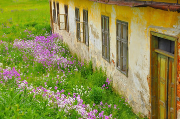 Abandoned house in the flowers field