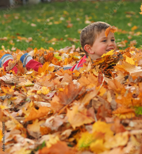 Boy in leaf pile stock photo and royalty free images on for 1 800 361 2613