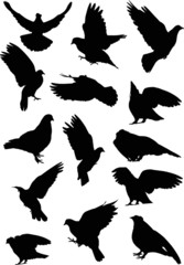 fourteen dove silhouettes isolated on white