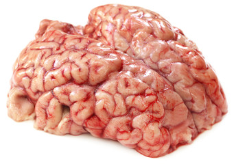 Brain of a cow