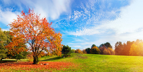 Poster Autumn Autumn, fall landscape. Tree with colorful leaves. Panorama