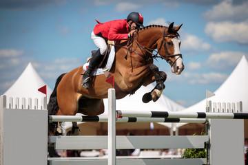 Foto op Plexiglas Paardrijden Equestrian