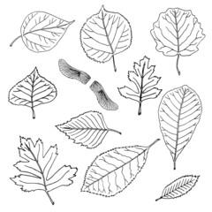 Hand-drawn leaves doodles set