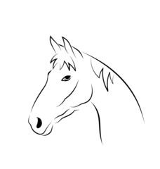 Outline head horse isolated on white background