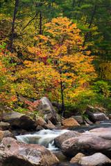 Wilson Creek autumn 11