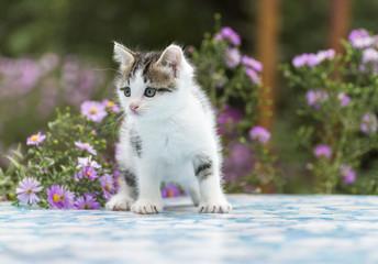 Motley kitten standing on  background of flowers