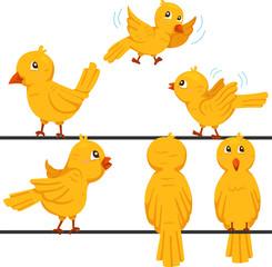 Illustrator of birds funny cartoon