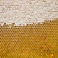 Honeycomb with fresh honey golden color