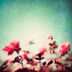 Textured vintage rose garden