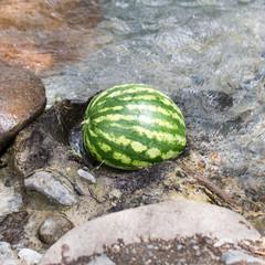 watermelon in the river