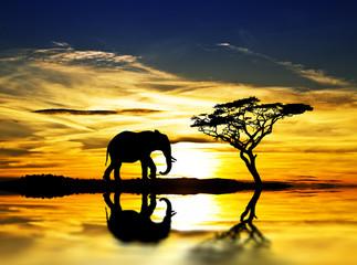 el elefante y la puesta de sol en el lago