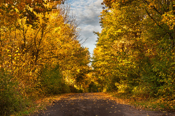 Forest path in autumn scenery