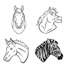 Horse And Zebra Collection
