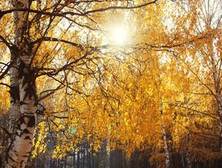 Autumn dense forest, branchy trees, landscape background