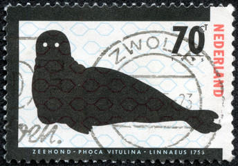 stamp printed in the Netherlands shows Harbor Seal