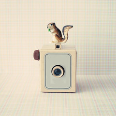 Vintage photo camera with toy squirrel on top