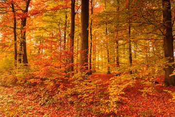 Canvas Prints Autumn beautiful autumn colors in the forest