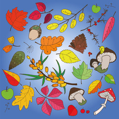 autumn collection of objects of different color leaves, cone