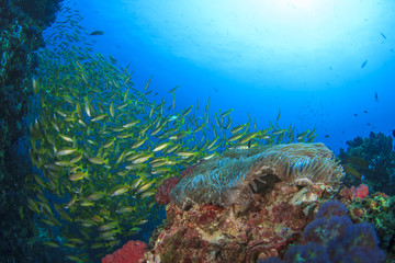 Coral Reef and Fish school underwater in ocean