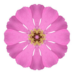 Pink Wildflower Flower Mandala  Isolated on White