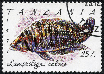 stamp printed in Tanzania shows Lamprologus calvus