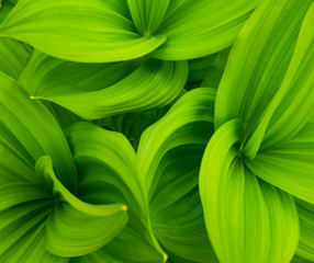 green leaves abstract background