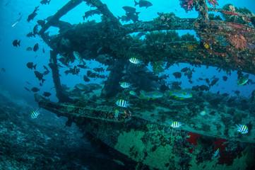 Wreck and fishes in Gili, Lombok, Nusa Tenggara Barat underwater