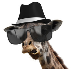 Funny animal portrait of a giraffe with shades and fedora