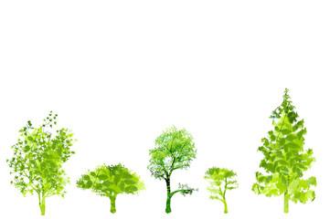木のイメージ 樹木 新緑