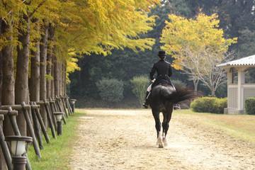 Papiers peints Equitation 乗馬