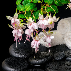 spa concept of branch fuchsia flower, towels, leaf shefler and z