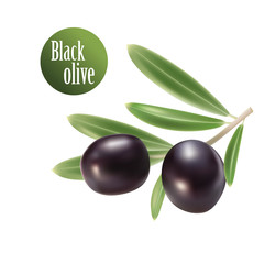 Vector olive oil. Decorative olive branch. For label, pack.