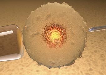 Ovulo, fecondazione assistita, artificiale