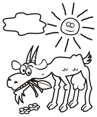 goat and sun