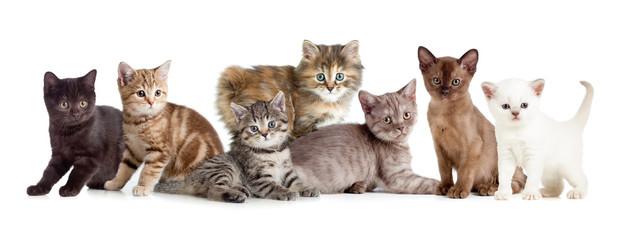 Papier Peint - different kitten or cats group