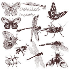 Collection of vector detailed insects for design