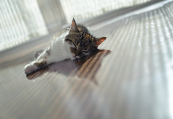 Cat is lying on floor heating