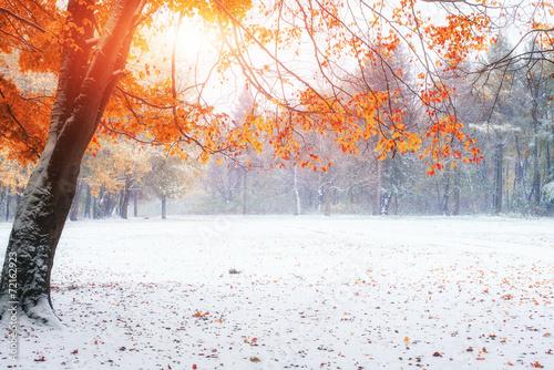 обои на рабочий стол природа осень и зима цветы № 230115 загрузить